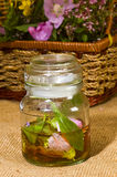 Herbal extract Royalty Free Stock Photography