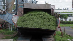 Herbal feed production for poultry from grass stock video