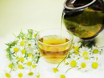 Herbal flora tea with daisy Royalty Free Stock Photography