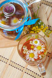 Herbal floral tea with camomile Stock Photography