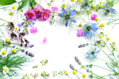 Herbal flowers royalty free stock images