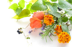Herbal flowers on white background Royalty Free Stock Photo