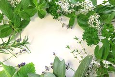 Herbal frame Stock Photography