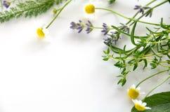 Herbal frame Stock Photo