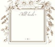 Herbal frame Royalty Free Stock Photo