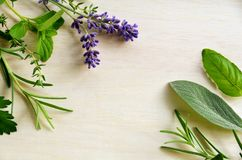 Herbal frame Stock Images