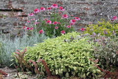Herbal garden bed. With popular herbs plants on the rock garden Royalty Free Stock Photography