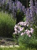 Herbal Garden Stock Images