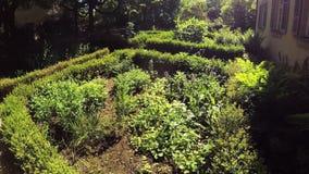 Herbal garden with plants