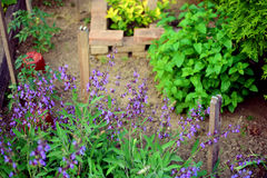 Herbal garden. Summer time in herbal garden Royalty Free Stock Photography