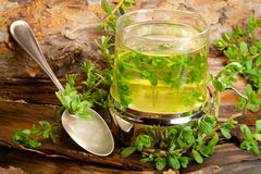 Herbal healing tea from Brahmi Royalty Free Stock Photos