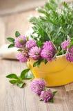 Herbal herbs. Sagebrush and clover royalty free stock photos