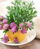 Herbal herbs. Sagebrush and clover royalty free stock photo