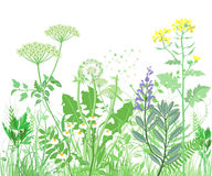 Herbal illustration Royalty Free Stock Images