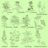 Herbal. Illustration of a plants in a vector with flower for use stock illustration