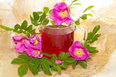 Herbal infusion of Rosa canina plant Stock Images
