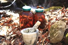 Herbal inspiration Royalty Free Stock Images