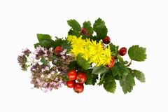 Herbal isolated on the white Royalty Free Stock Photos