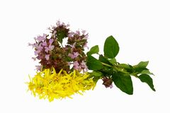 Herbal isolated on the white background. Herbal isolated in the white background Stock Image