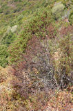 Herbal jungle. Wild sun dried bush of herbs growing in mountains, typical south european macchia vegetation stock photo