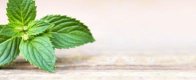 Herbal leaf banner Stock Photo