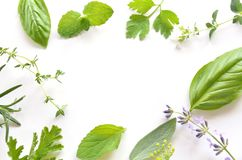 Herbal leaves. Frame of herbal leaves on white background stock images