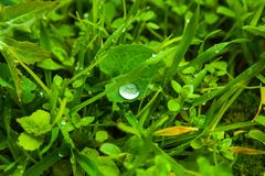 Herbal leaves with water drops at the beginning of the day stock image