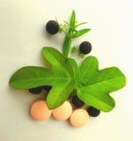 Herbal logo Royalty Free Stock Photo
