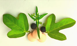 Herbal logo Stock Image