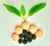 Herbal logo Stock Photos