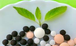 Herbal logo Stock Images