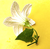 Herbal logo Stock Photography