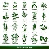 Herbal medicinal vector set echinacea gentian johns wort. Arnica baldrian coltsfoot checker angelica mugwort alchemilla coriander royalty free illustration