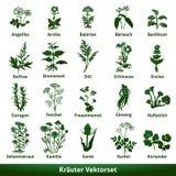 Herbal medicinal vector set echinacea gentian johns wort. Arnica baldrian coltsfoot checker angelica mugwort alchemilla coriander stock illustration