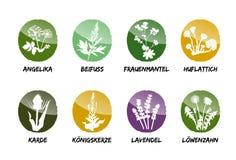 Herbal medicinal vector set natural garden beet refine. Alchemilla coltsfoot teasel mullein lavender dandelion royalty free illustration