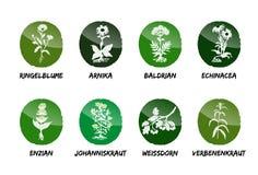 Herbal medicinal vector set natural garden beet refine. Marigold Arnica Valerian Echinacea Gentian St. John`s Wort Hawthorn Verbena herb royalty free illustration
