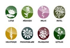 Herbal medicinal vector set natural garden beet refine. Red clover mistletoe evening primrose passionflower geranium Lotus meadowsweet mallow vector illustration