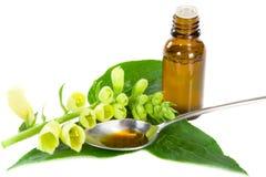 Herbal medicine Stock Photos