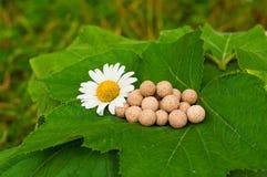 Herbal Medicine Royalty Free Stock Photo
