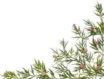 Herbal medicine background stock photo
