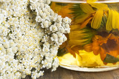 Herbal Medicine, Background,  Yarrow and Calendula Oil Stock Photo