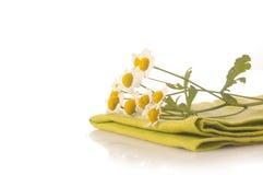 Herbal medicine: camomile Stock Photo