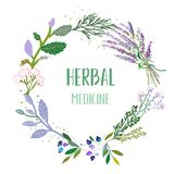 Herbal medicine card or label with frame - flowers, plants and herbs. Vector  illustration Royalty Free Stock Photography