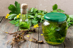 Herbal medicine: celandine, tincture, oil and roots Stock Images