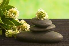 Herbal medicine,  clower flower Royalty Free Stock Images
