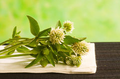 Herbal medicine: clower Royalty Free Stock Photos