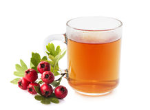 Herbal medicine: Crataegus tea. Crataegus commonly called hawthorn, thornapple and hawberry isolated on white background Royalty Free Stock Image