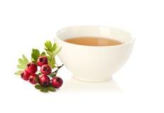 Herbal medicine: Crataegus tea and crataegus berries Royalty Free Stock Photography