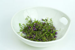 Herbal Medicine,forest Thyme On White Bowl Stock Photo