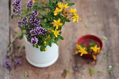 Herbal medicine. Fresh herbs in the mortar - alternative medicine. Herbal medicine. Fresh herbs in the mortar Stock Images